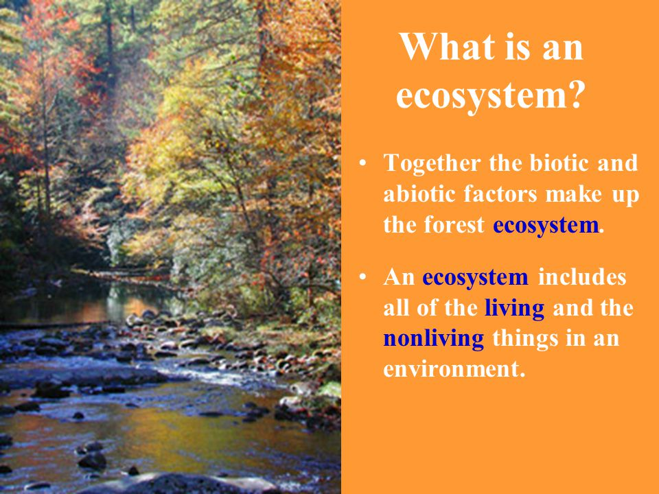 What is an ecosystem? Together the biotic and abiotic factors make up the forest ecosystem. An ecosystem includes all of the living and the nonliving