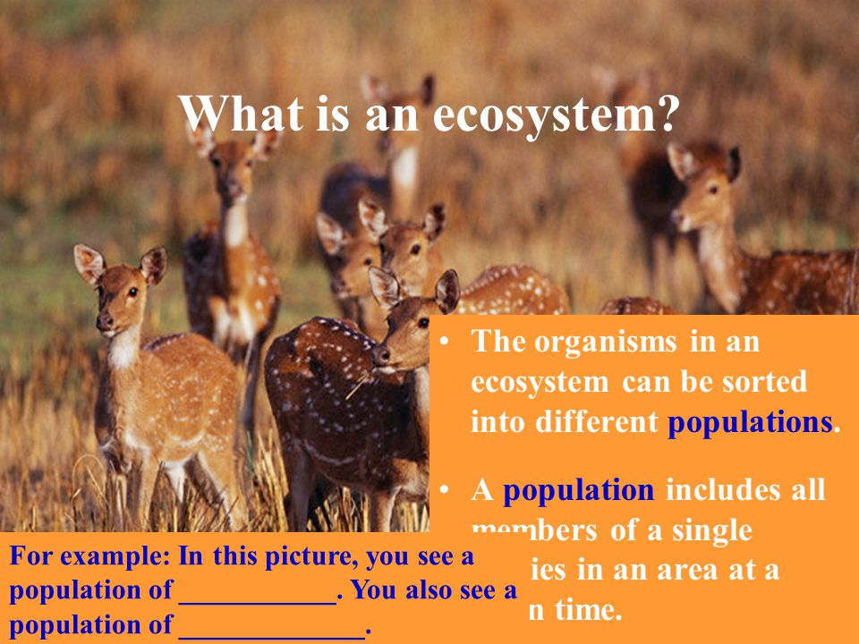 What is an ecosystem? The organisms in an ecosystem can be sorted into different populations. A population includes all members of a single species in