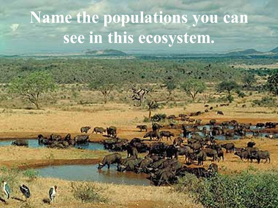 Name the populations you can see in this ecosystem.