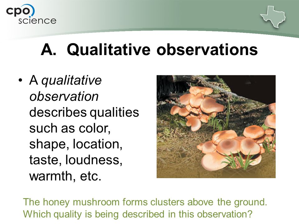 Quantitative observations use a number or measurement to describe something.
