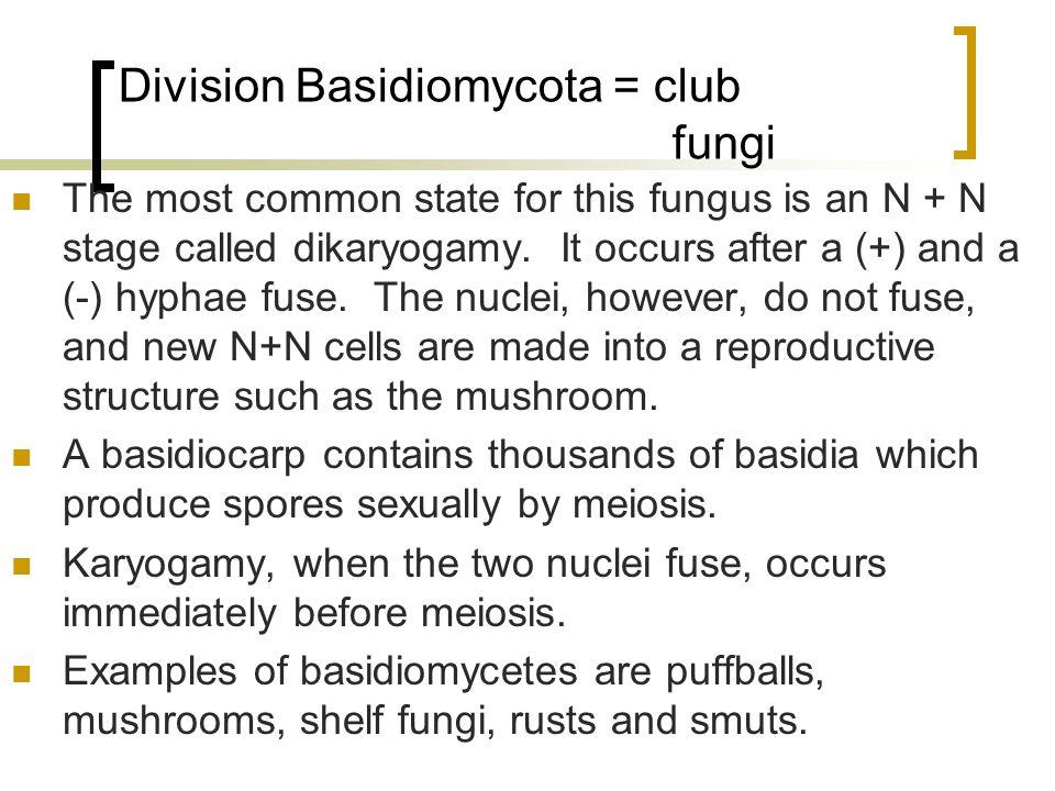 Ascus Vs. Basidium
