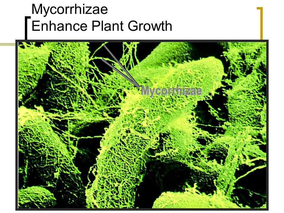 Fructicose, Foliose, and Crustose lichens