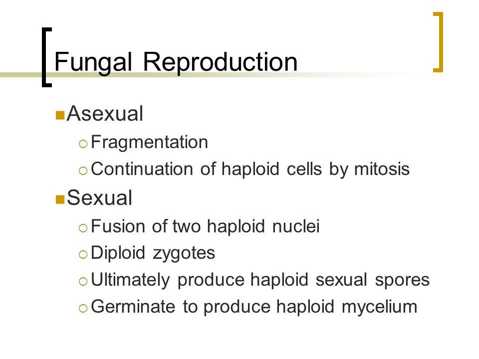 Chytrid Filaments Male Female