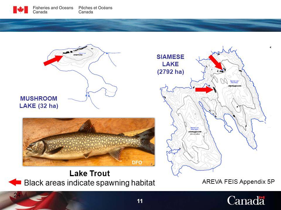 24 11 Lake Trout Black areas indicate spawning habitat AREVA FEIS Appendix 5P MUSHROOM LAKE (32 ha) SIAMESE LAKE (2792 ha) DFO