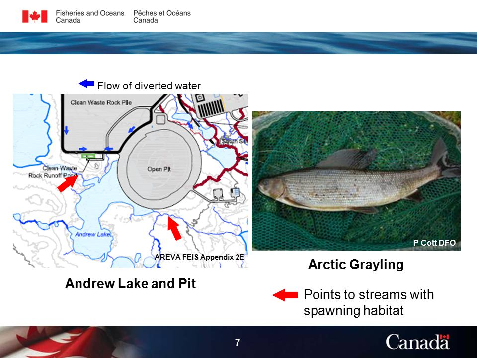 7 Arctic Grayling AREVA FEIS Appendix 2E P Cott DFO Andrew Lake and Pit Points to streams with spawning habitat Flow of diverted water