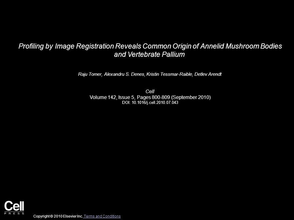 Profiling by Image Registration Reveals Common Origin of Annelid Mushroom Bodies and Vertebrate Pallium Raju Tomer, Alexandru S.