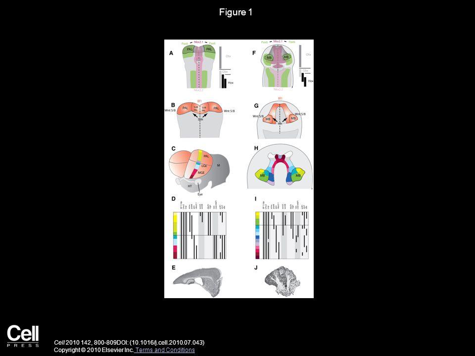 Figure 1 Cell 2010 142, 800-809DOI: (10.1016/j.cell.2010.07.043) Copyright © 2010 Elsevier Inc.