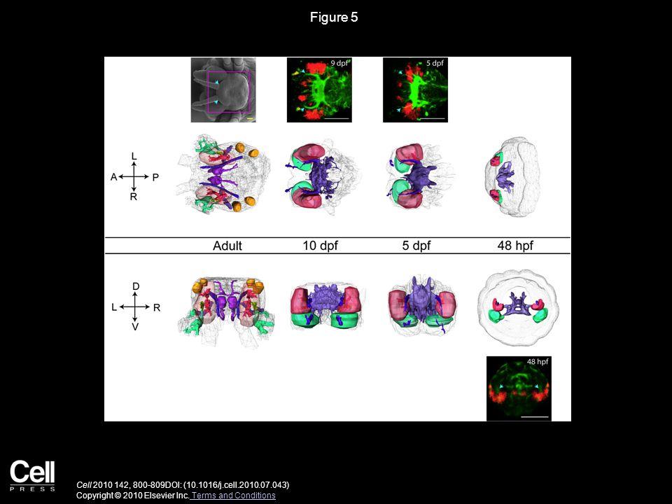Figure 5 Cell 2010 142, 800-809DOI: (10.1016/j.cell.2010.07.043) Copyright © 2010 Elsevier Inc.