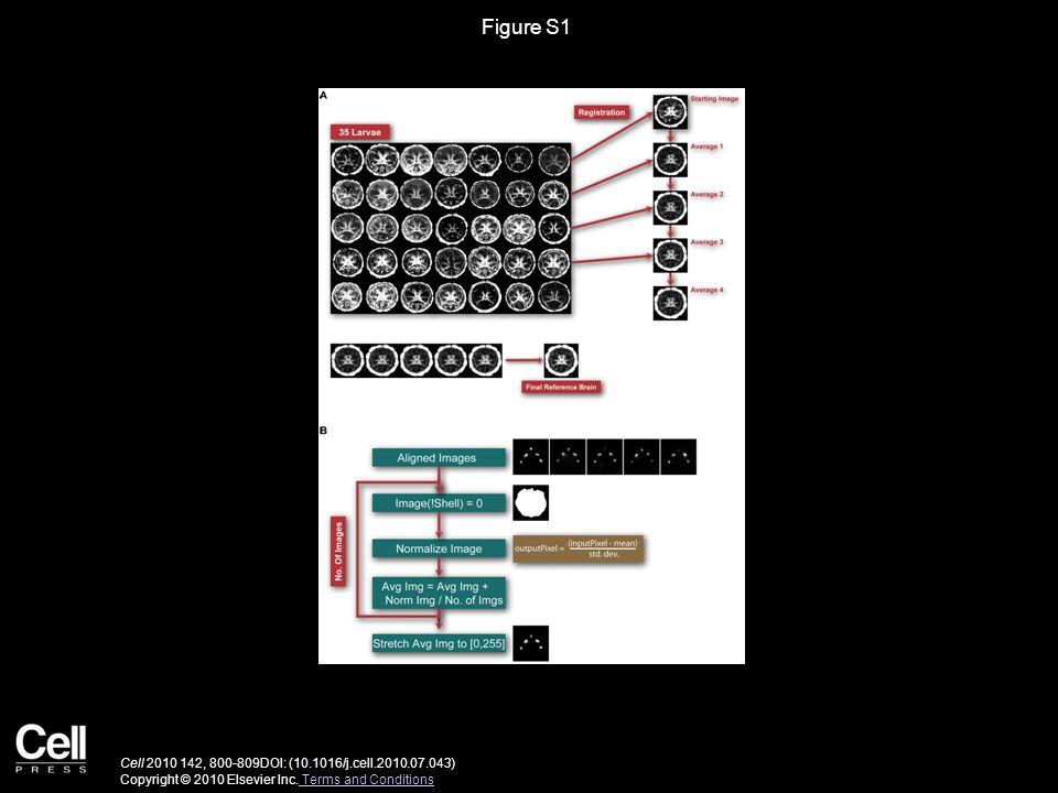 Figure S1 Cell 2010 142, 800-809DOI: (10.1016/j.cell.2010.07.043) Copyright © 2010 Elsevier Inc.