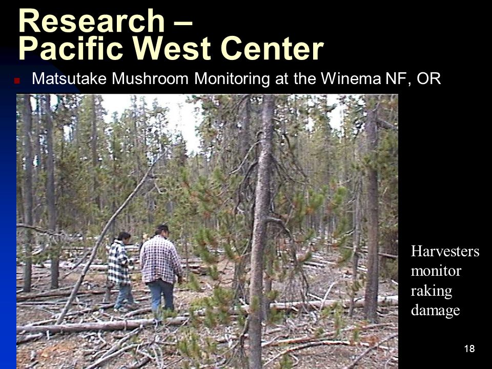 18 Research – Pacific West Center Matsutake Mushroom Monitoring at the Winema NF, OR Harvesters monitor raking damage