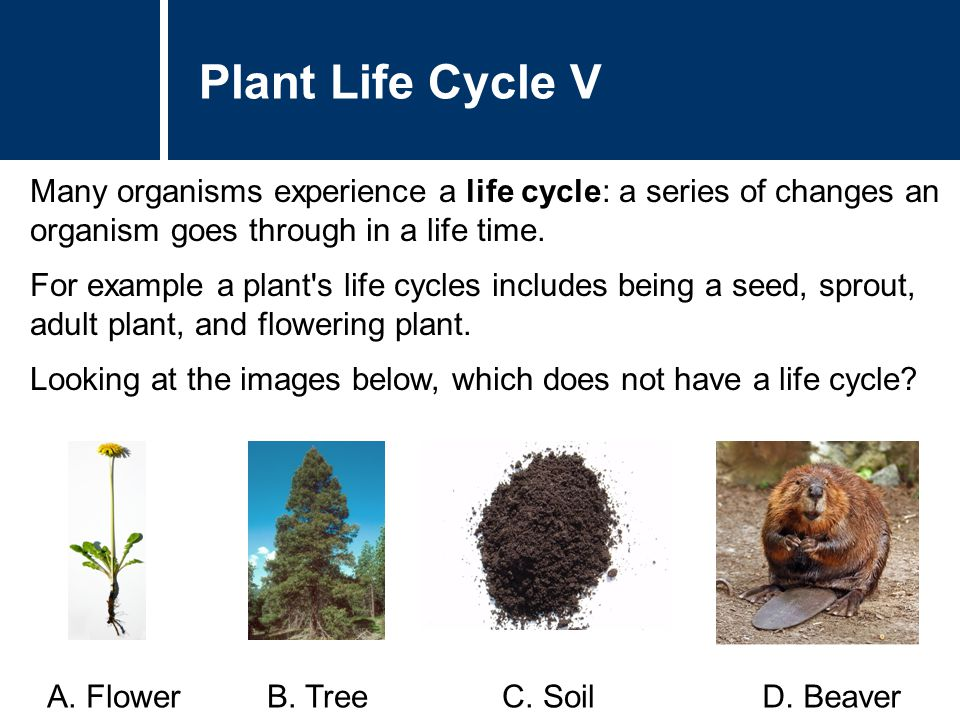 Many organisms experience a life cycle: a series of changes an organism goes through in a life time. For example a plant's life cycles includes being
