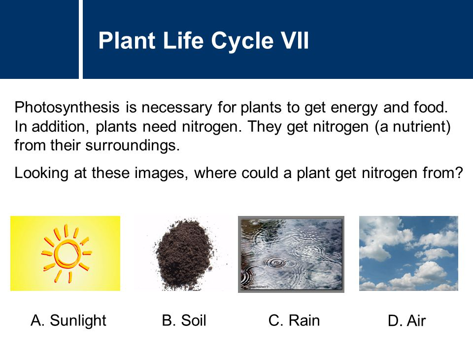 Plant Life Cycle VII Photosynthesis is necessary for plants to get energy and food. In addition, plants need nitrogen. They get nitrogen (a nutrient)