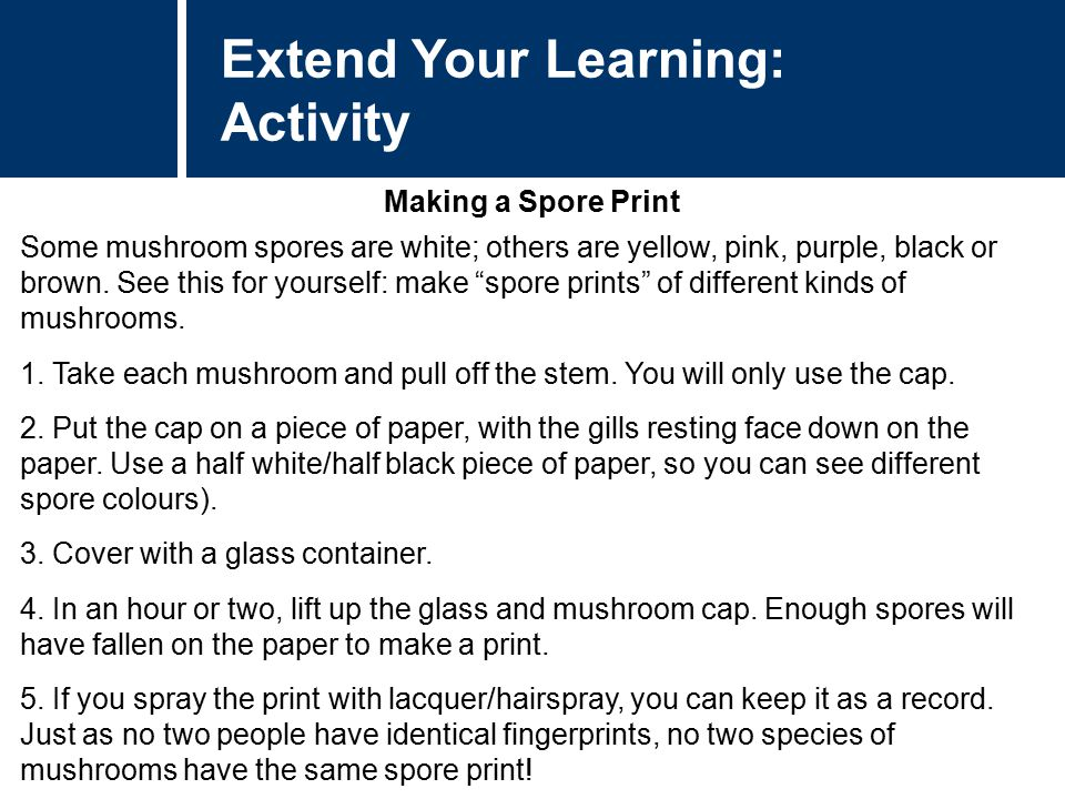 Extend Your Learning: Activity Making a Spore Print Some mushroom spores are white; others are yellow, pink, purple, black or brown. See this for your