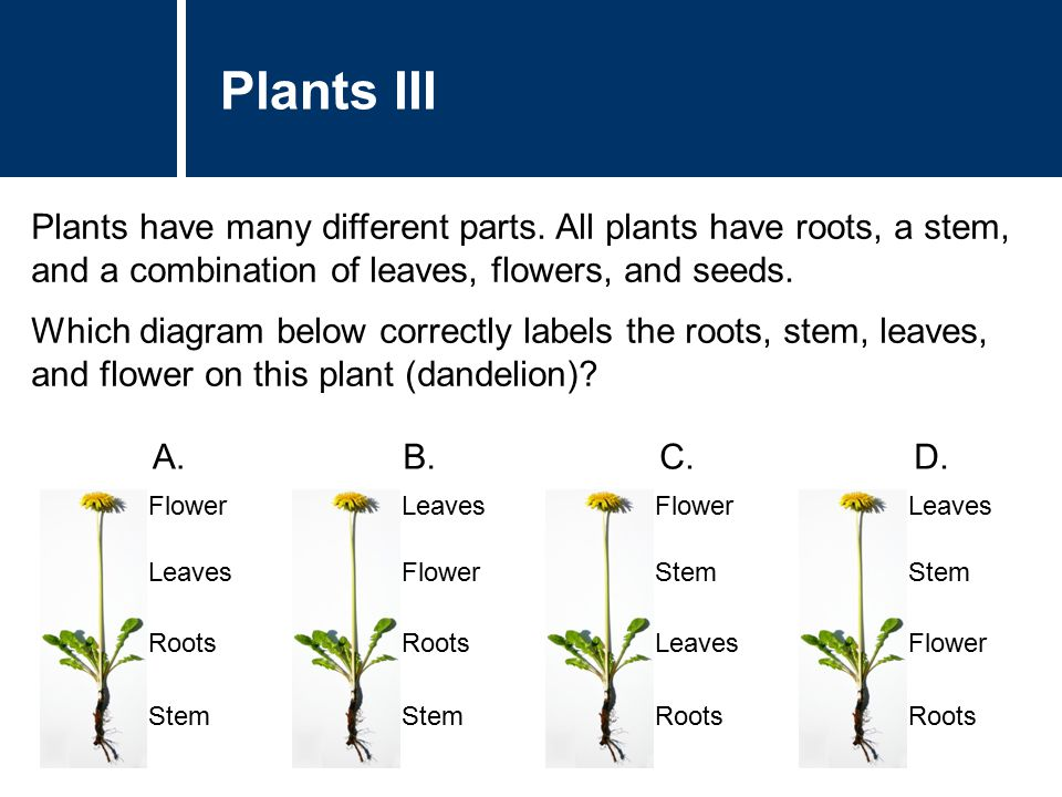 Plants III Plants have many different parts. All plants have roots, a stem, and a combination of leaves, flowers, and seeds. Which diagram below corre