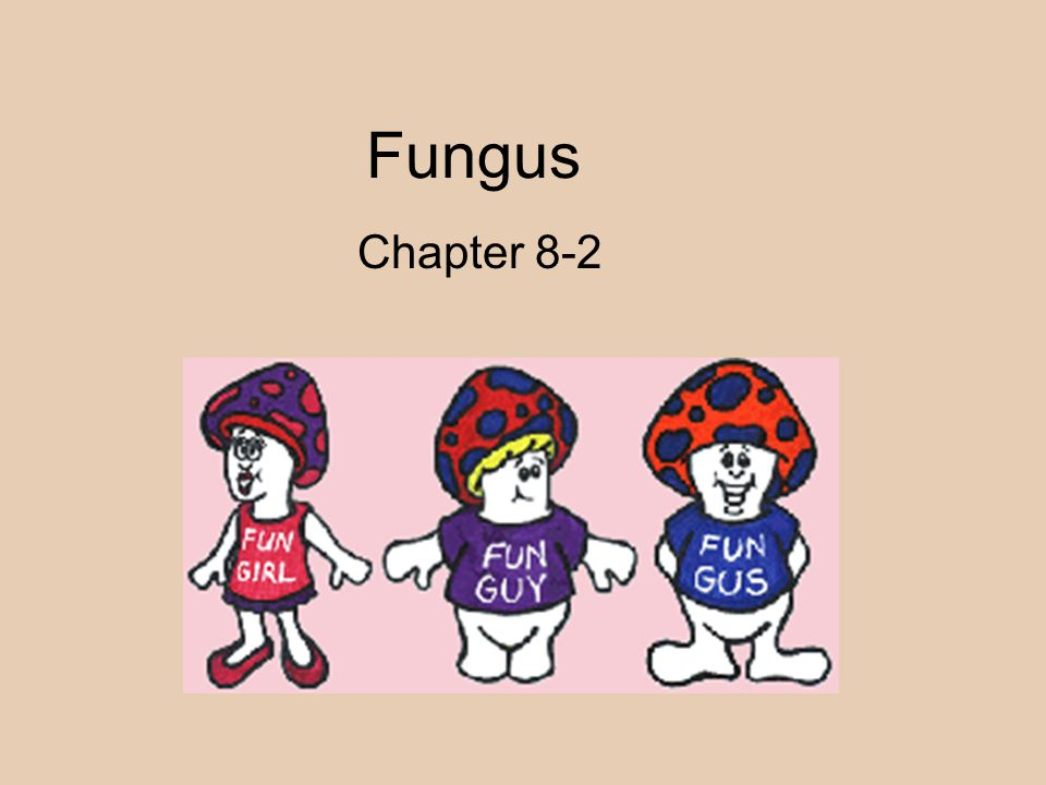 Fungus Chapter 8-2