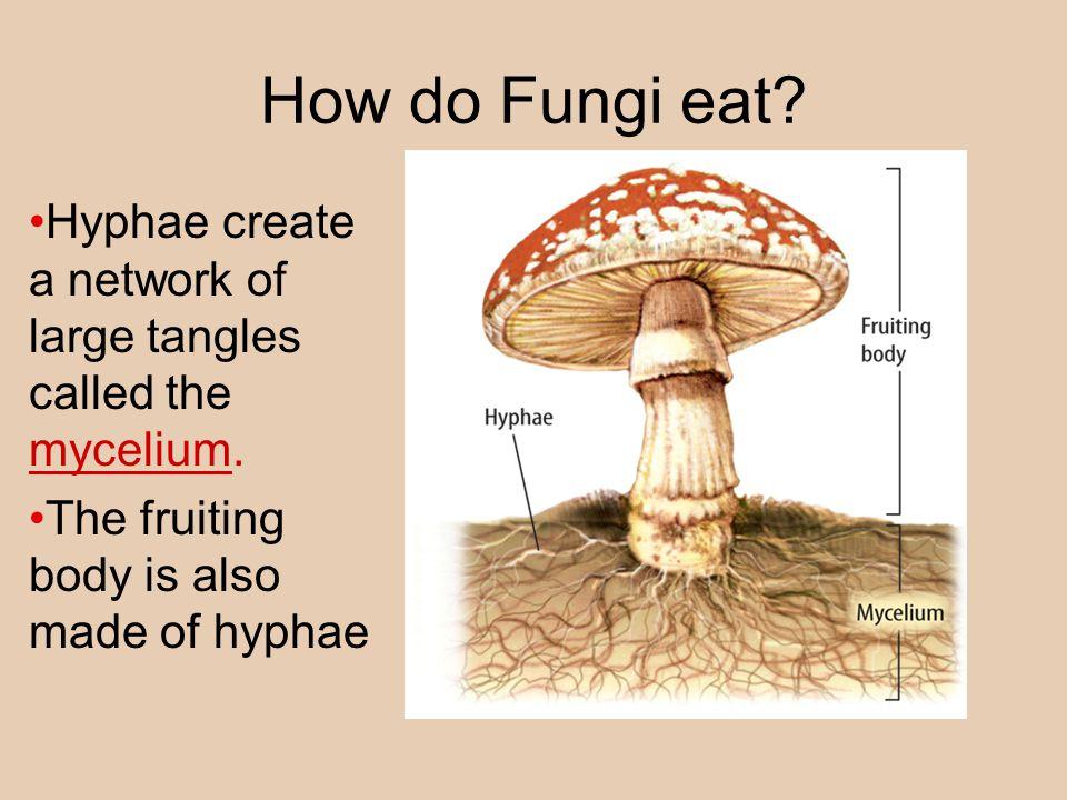 What are Fungi.