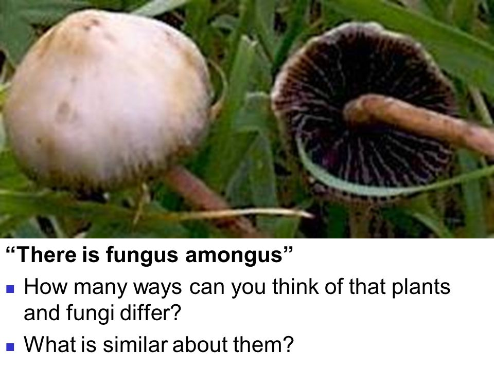 "Bellringer ""There is fungus amongus"" How many ways can you think of that plants and fungi differ? What is similar about them?"