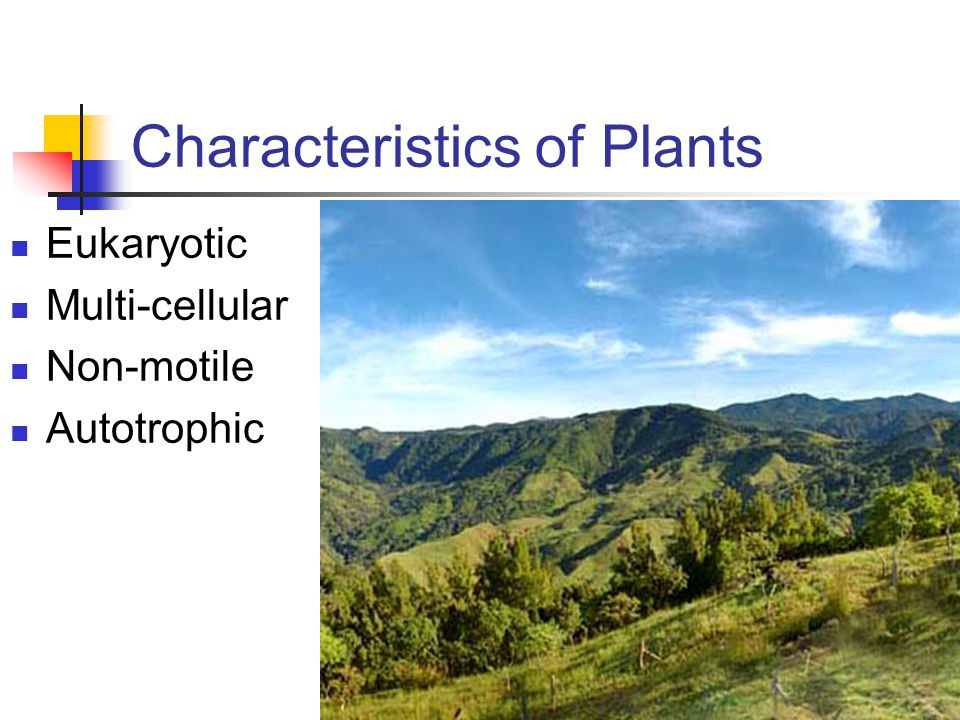 Characteristics of Plants Eukaryotic Multi-cellular Non-motile Autotrophic