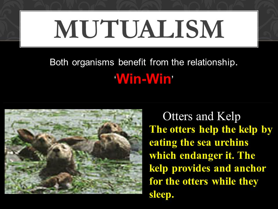 Mutualism, Commensalism, Parasitism WHICH TYPE OF SYMBIOSIS IS IT.