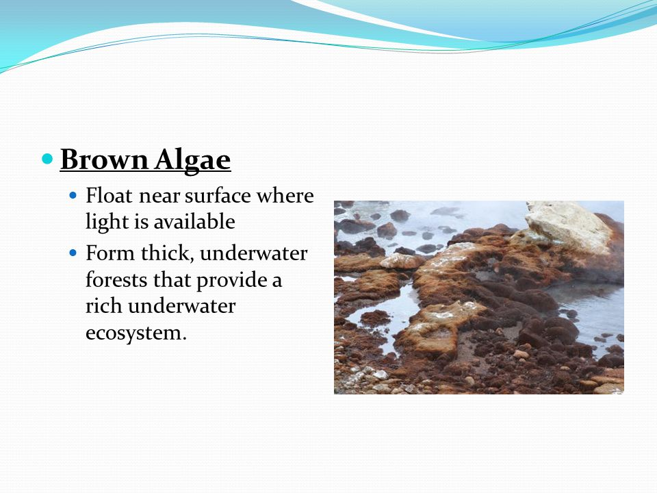Green Algae Most diverse.Most are in fresh water.