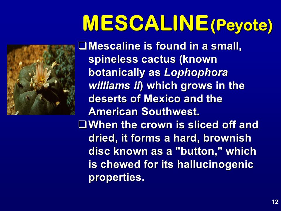 MESCALINE (Peyote)  Mescaline is found in a small, spineless cactus (known botanically as Lophophora williams ii) which grows in the deserts of Mexic