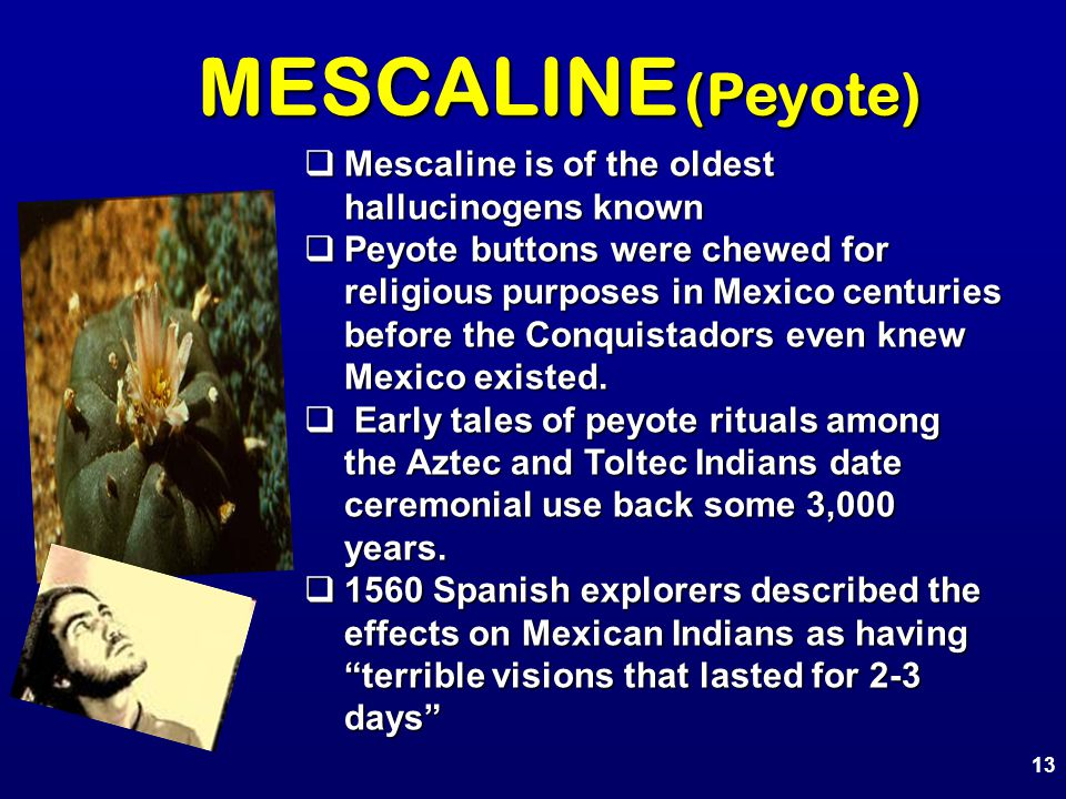 MESCALINE (Peyote)  Mescaline is of the oldest hallucinogens known  Peyote buttons were chewed for religious purposes in Mexico centuries before the Conquistadors even knew Mexico existed.