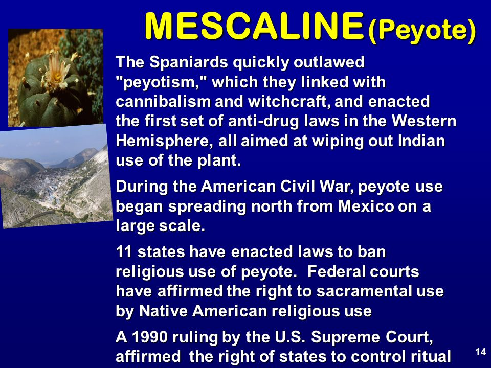 MESCALINE (Peyote) The Spaniards quickly outlawed peyotism, which they linked with cannibalism and witchcraft, and enacted the first set of anti-drug laws in the Western Hemisphere, all aimed at wiping out Indian use of the plant.