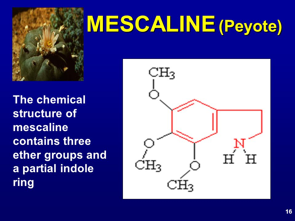 MESCALINE (Peyote) The chemical structure of mescaline contains three ether groups and a partial indole ring 16