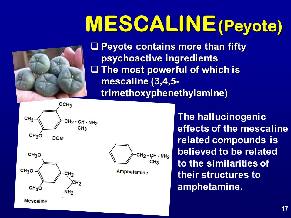 MESCALINE (Peyote)  Peyote contains more than fifty psychoactive ingredients  The most powerful of which is mescaline (3,4,5- trimethoxyphenethylami