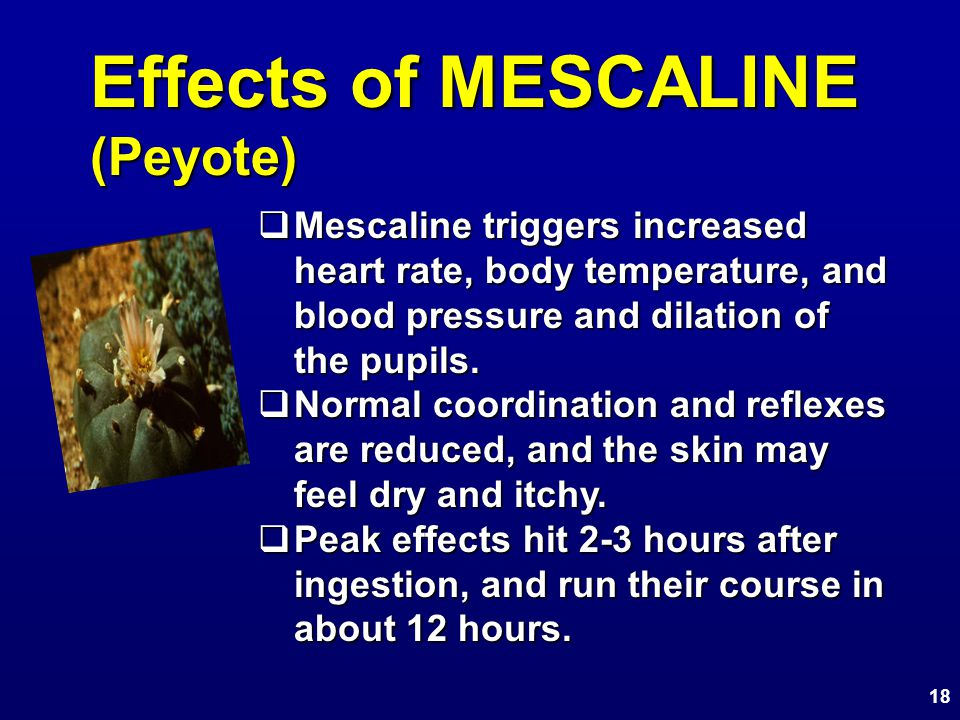 Effects of MESCALINE (Peyote)  Mescaline triggers increased heart rate, body temperature, and blood pressure and dilation of the pupils.