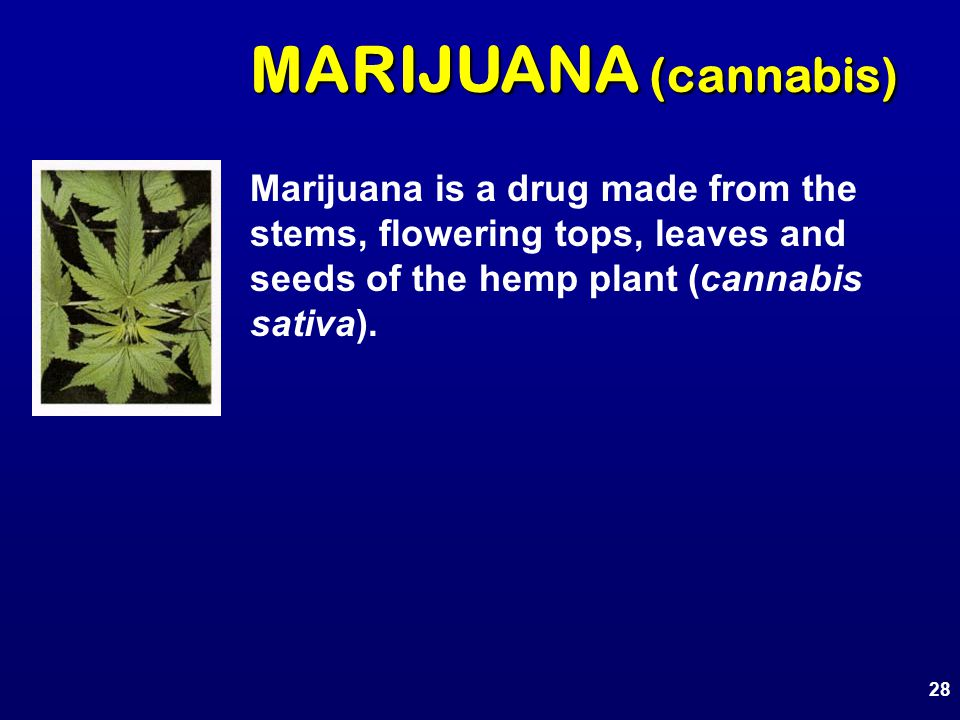 Marijuana is a drug made from the stems, flowering tops, leaves and seeds of the hemp plant (cannabis sativa). 28