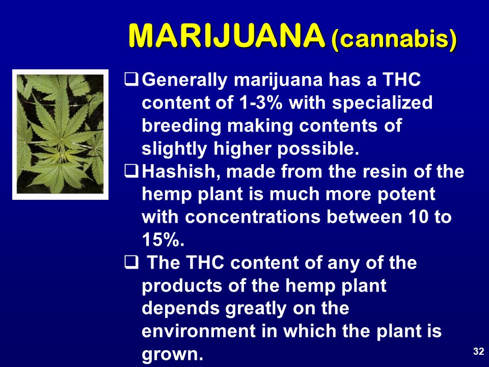 MARIJUANA (cannabis)  Generally marijuana has a THC content of 1-3% with specialized breeding making contents of slightly higher possible.