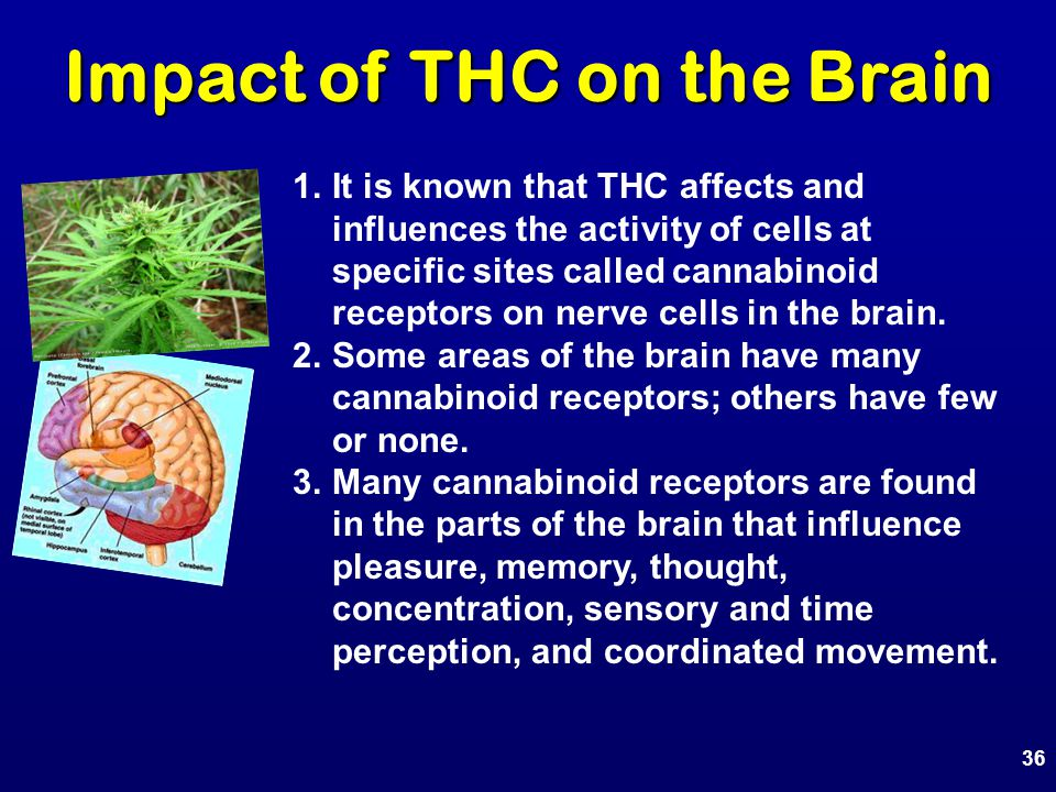 1.It is known that THC affects and influences the activity of cells at specific sites called cannabinoid receptors on nerve cells in the brain. 2.Some