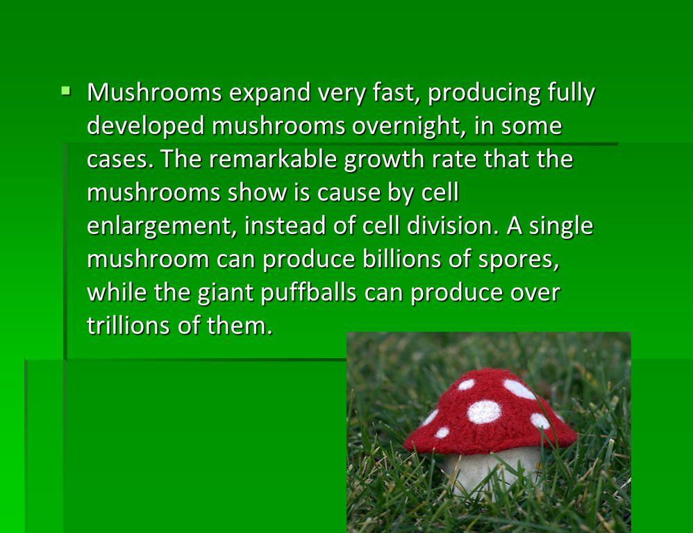Basidiospores, or spores Basidiospores, or spores