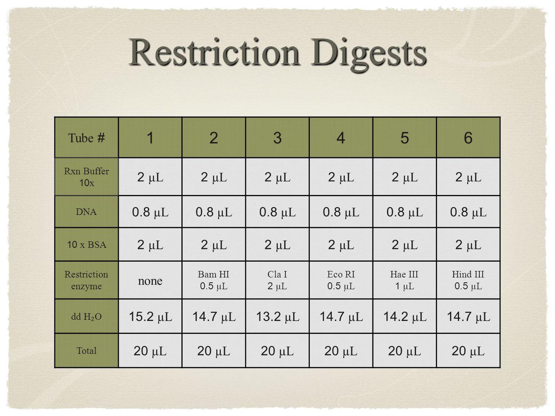 Restriction Digests Tube # 123456 Rxn Buffer 10 x 2 µL DNA 0.8 µL 10 x BSA 2 µL Restriction enzyme none Bam HI 0.5 µL Cla I 2 µL Eco RI 0.5 µL Hae III 1 µL Hind III 0.5 µL dd H ₂ O 15.2 µL 14.7 µL 13.2 µL 14.7 µL 14.2 µL 14.7 µL Total 20 µL