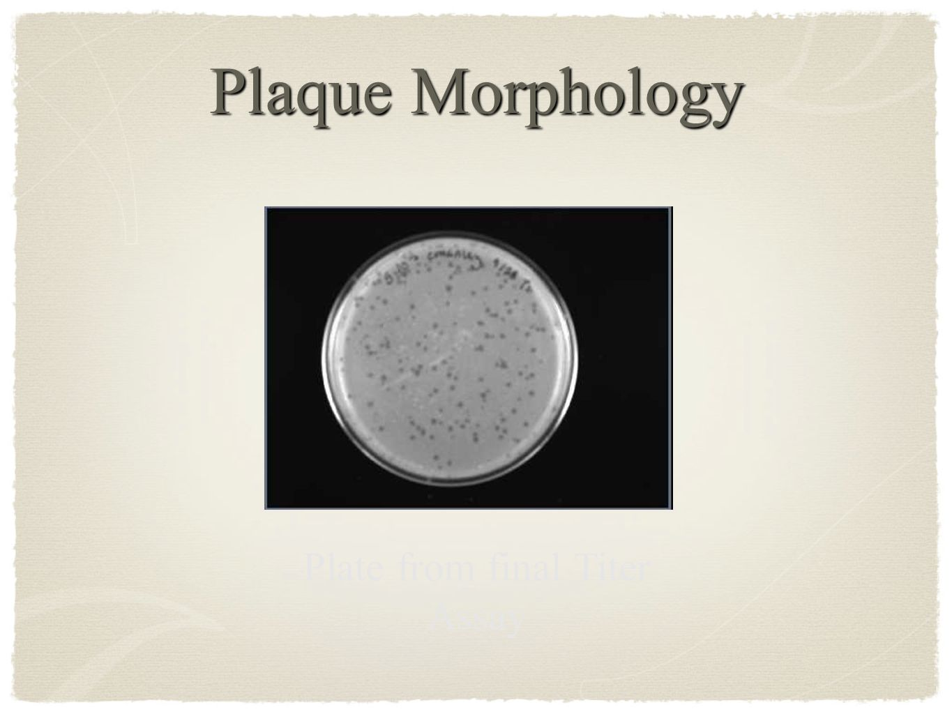 Plaque Morphology Plate from final Titer Assay