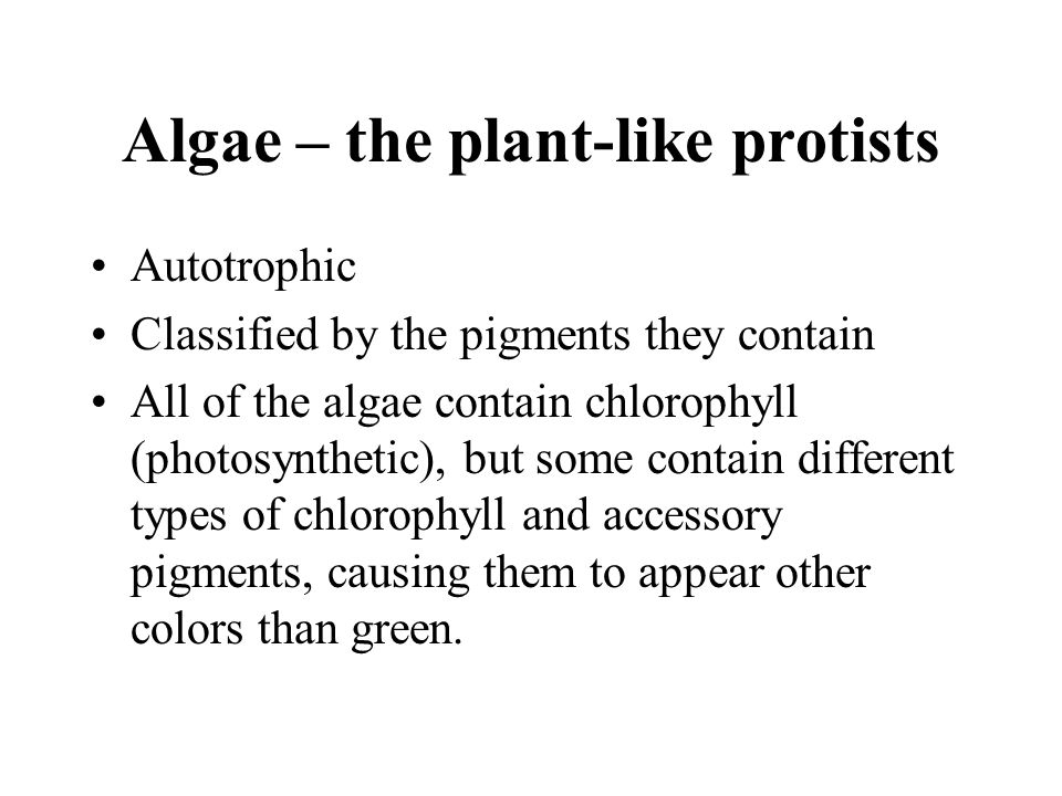 Algae – the plant-like protists Autotrophic Classified by the pigments they contain All of the algae contain chlorophyll (photosynthetic), but some co
