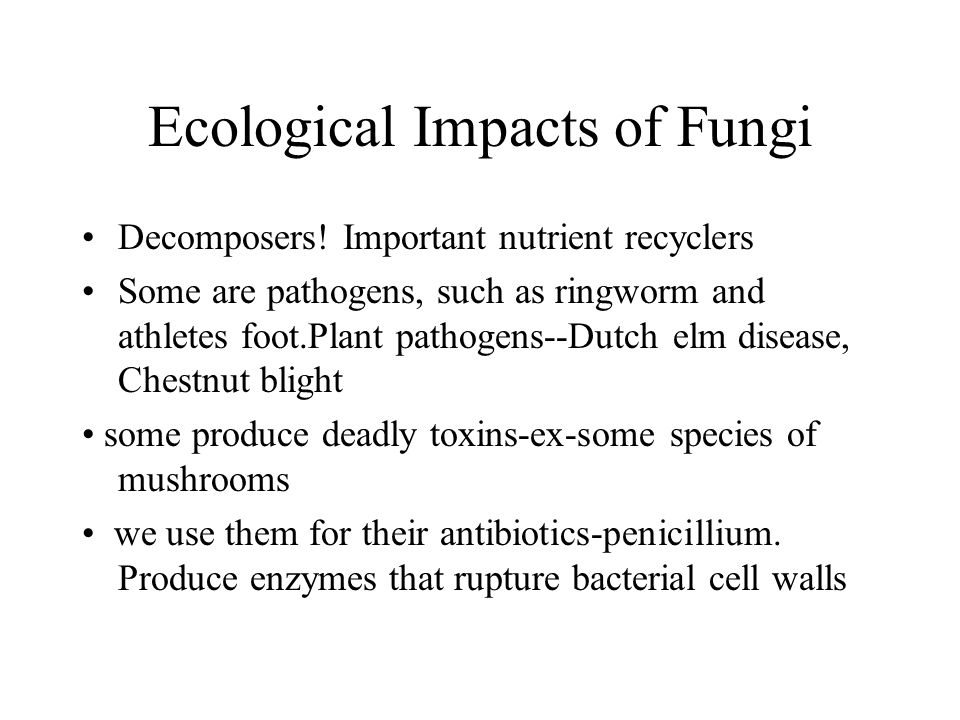 Ecological Impacts of Fungi Decomposers! Important nutrient recyclers Some are pathogens, such as ringworm and athletes foot.Plant pathogens--Dutch el