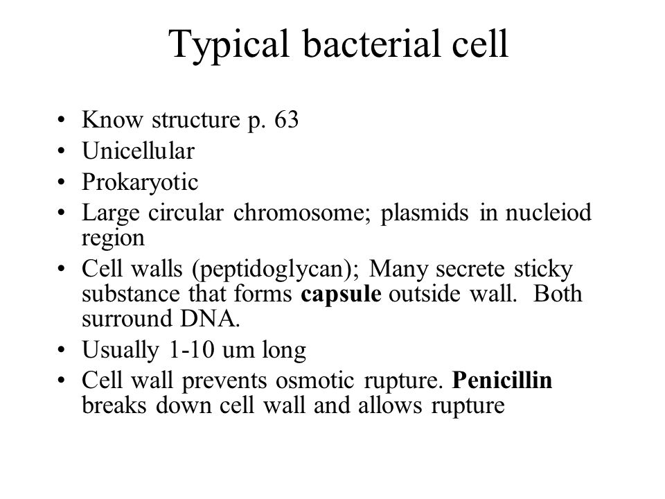 Typical bacterial cell Know structure p. 63 Unicellular Prokaryotic Large circular chromosome; plasmids in nucleiod region Cell walls (peptidoglycan);