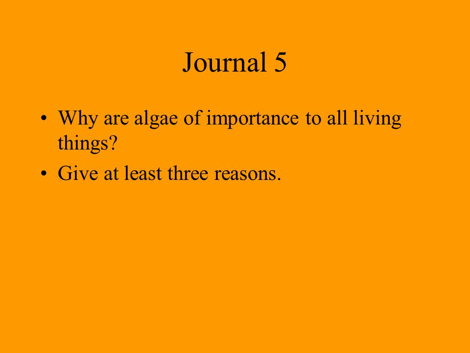 Journal 5 Why are algae of importance to all living things? Give at least three reasons.