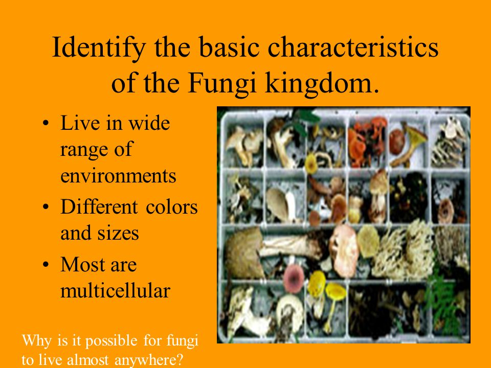 Identify the basic characteristics of the Fungi kingdom. Live in wide range of environments Different colors and sizes Most are multicellular Why is i