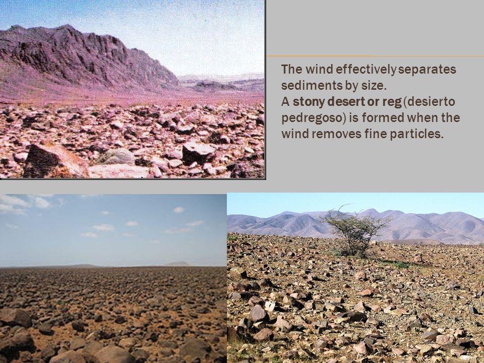 The wind effectively separates sediments by size. A stony desert or reg (desierto pedregoso) is formed when the wind removes fine particles.