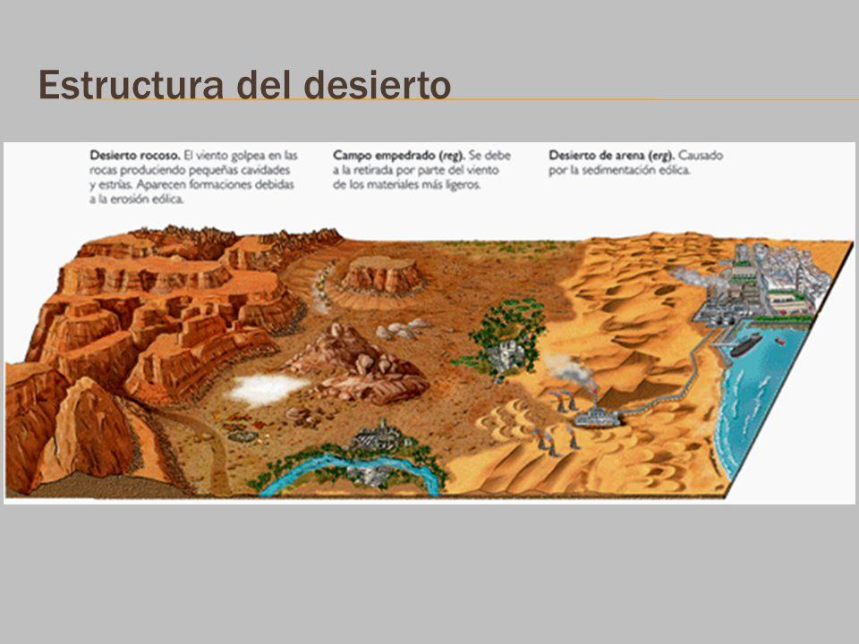 Estructura del desierto