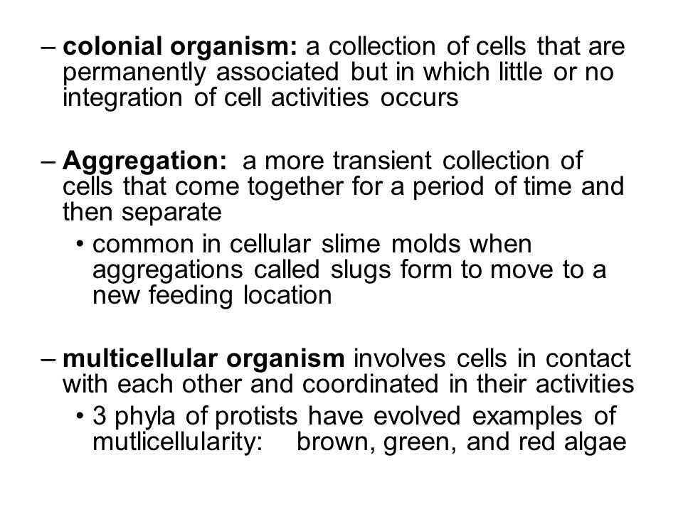 –colonial organism: a collection of cells that are permanently associated but in which little or no integration of cell activities occurs –Aggregation: a more transient collection of cells that come together for a period of time and then separate common in cellular slime molds when aggregations called slugs form to move to a new feeding location –multicellular organism involves cells in contact with each other and coordinated in their activities 3 phyla of protists have evolved examples of mutlicellularity: brown, green, and red algae