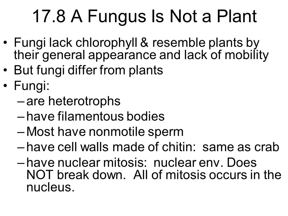 17.8 A Fungus Is Not a Plant Fungi exist mainly in the form of slender filaments called hyphae (singular, hypha) –a mass of hyphae is called a mycelium (plural, mycelia) –fungal cells are able to exhibit a high degree of communication w/i a mycelium cytoplasm is able to cross between adjacent hyphal cells by a process called cytoplasmic streaming multiple nuclei can be connected through the shared cytoplasm