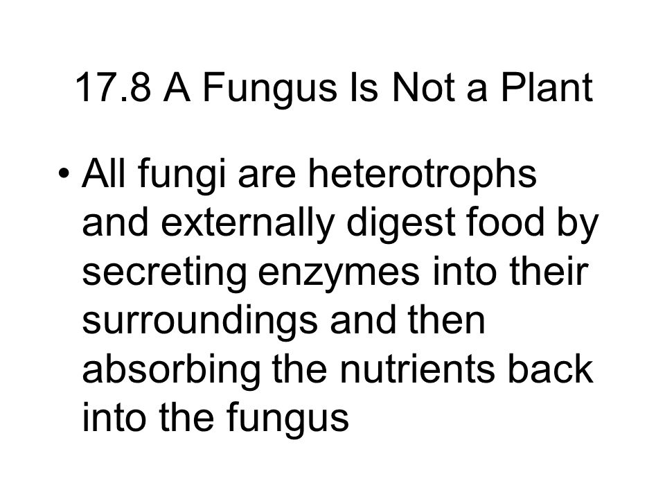 Fig 17.13 The oyster mushroom –some fungi are predatory, such as the oyster fungus.