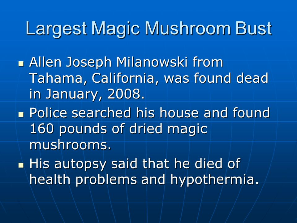 Largest Magic Mushroom Bust Allen Joseph Milanowski from Tahama, California, was found dead in January, 2008.