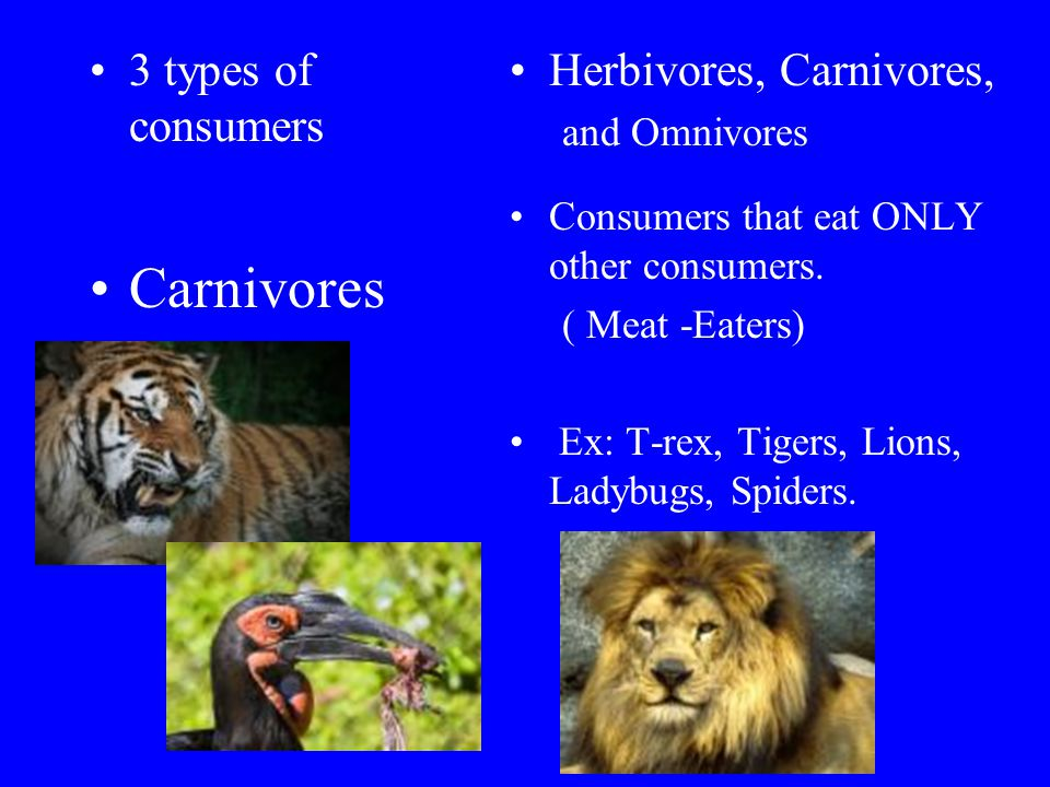 3 types of consumers Carnivores Herbivores, Carnivores, and Omnivores Consumers that eat ONLY other consumers.