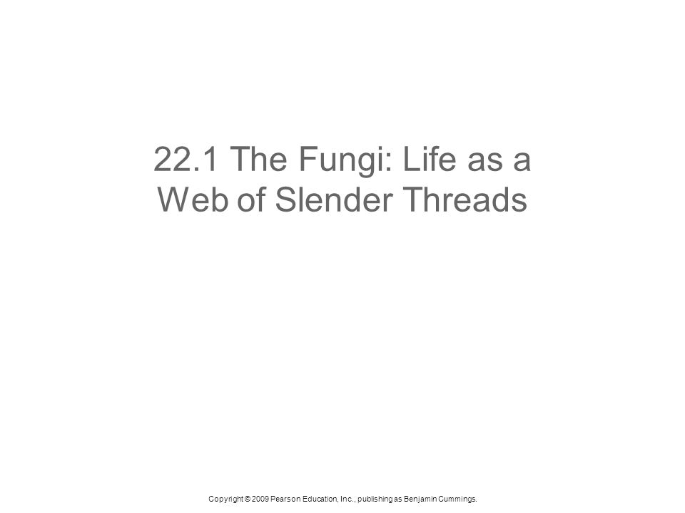 Copyright © 2009 Pearson Education, Inc., publishing as Benjamin Cummings. 22.1 The Fungi: Life as a Web of Slender Threads
