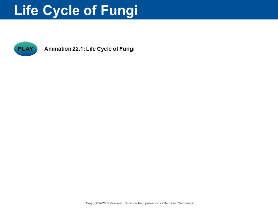 Copyright © 2009 Pearson Education, Inc., publishing as Benjamin Cummings. Life Cycle of Fungi PLAY Animation 22.1: Life Cycle of Fungi